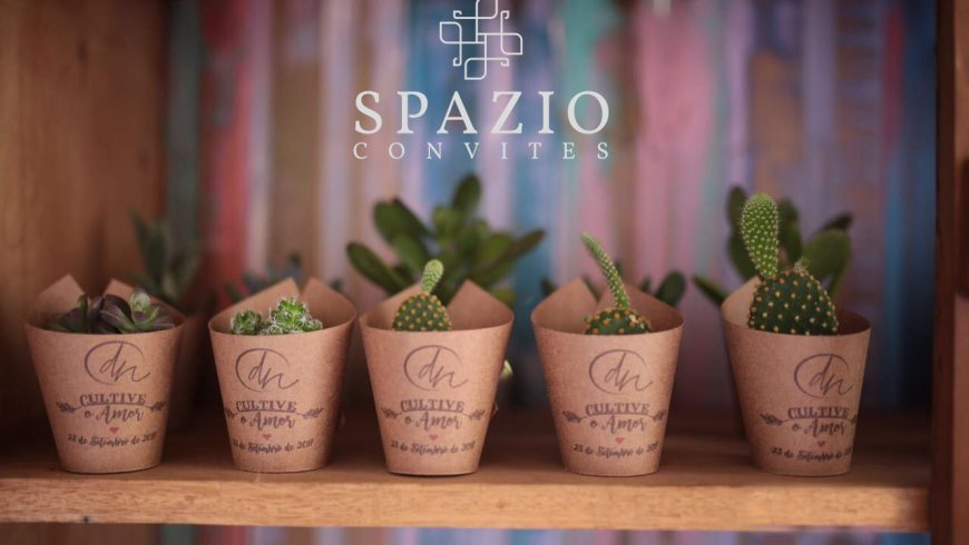 Plantinha Suculenta | Como cuidar